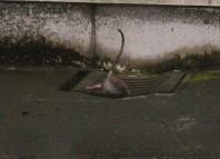 Comex et LBMA : les rats quittent le navire ?